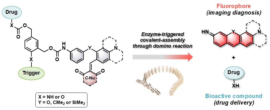 Simplified principle of next-generation fluorogenic theranostic agents (fluorogenic pro-drugs) claimed in the InnoTherano project.